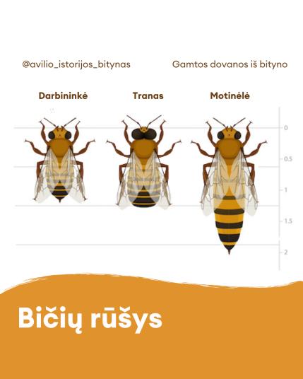 medus bites